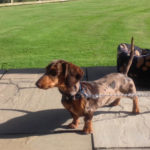 We love small well behaved dogs like Percy xx