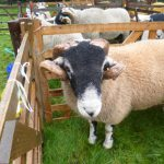 North Yorkshire agricultural show