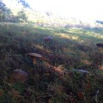 Autumn gatherings under the beech trees at Crag House Farm