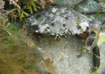 Rock pooling and crabbing