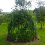 Our willow summer house at Crag House Farm