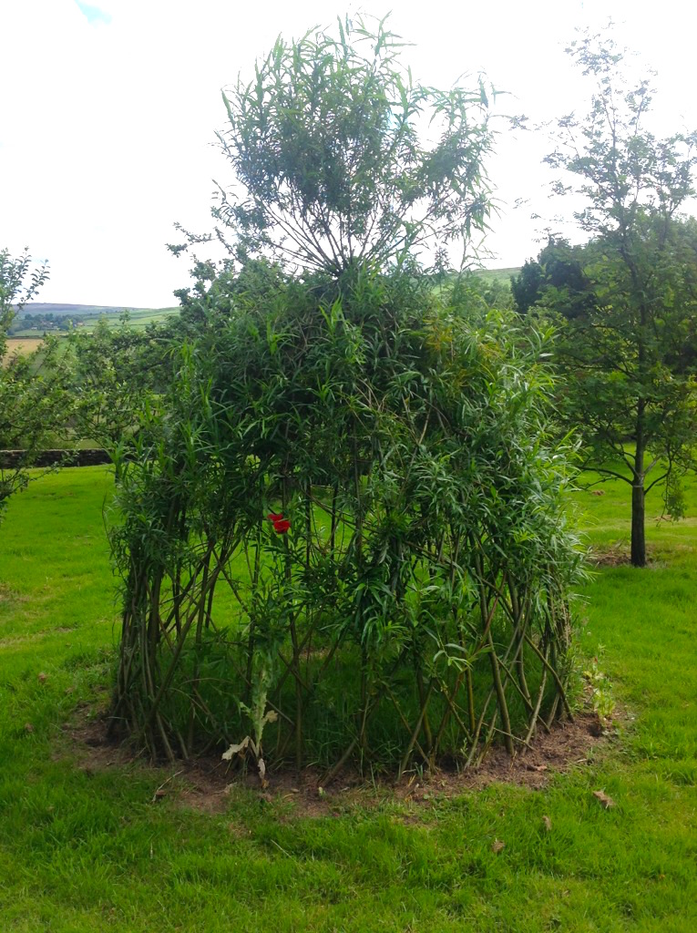 Our Living Willow Teepee Crag House Farm