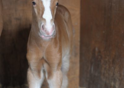 Foal on day 2
