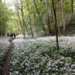 North York Moors ancient woodland