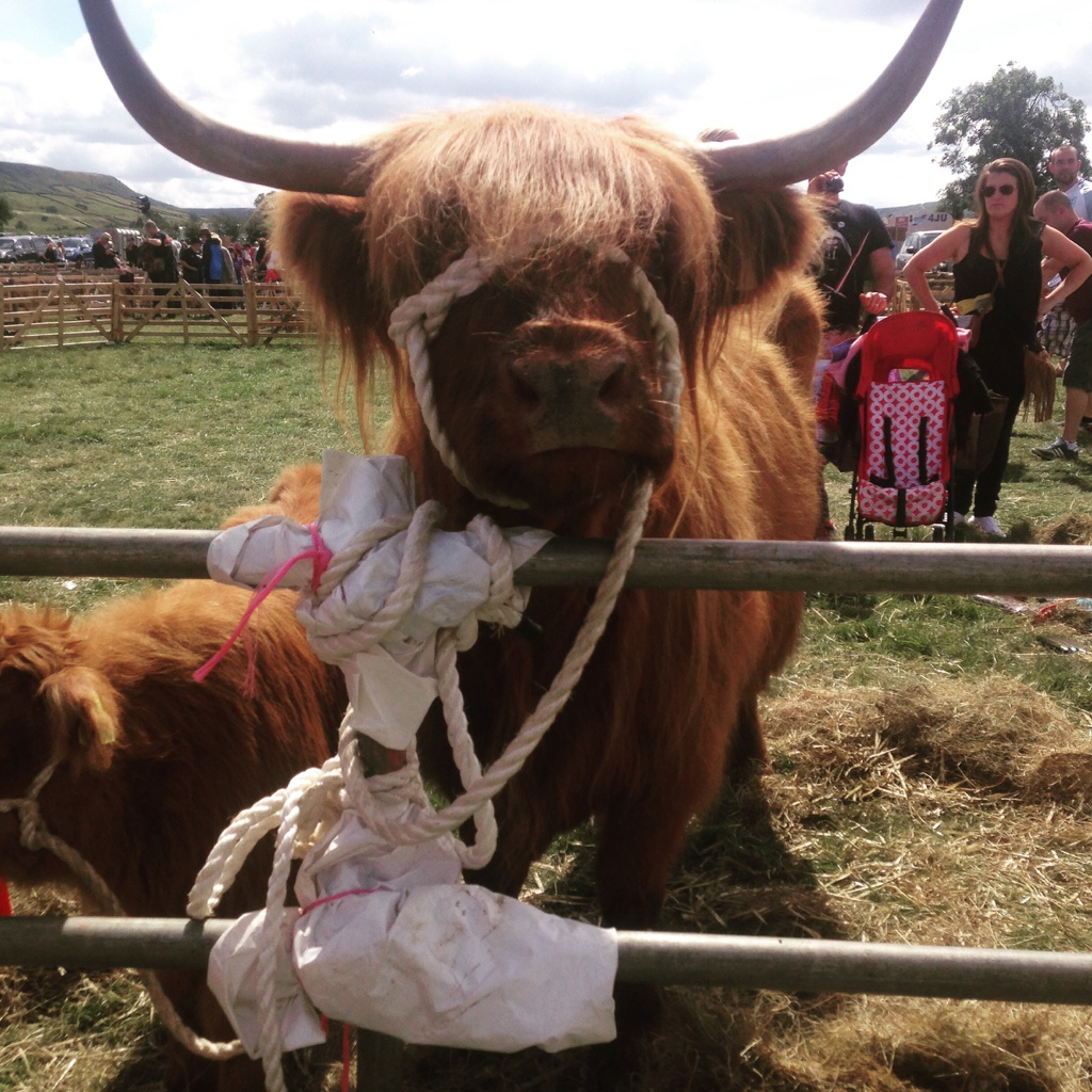 God's own Country hosts the finest Agricultural shows