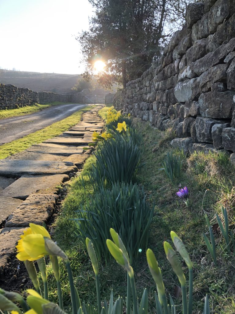 Spring sunshine flowers on a country Yorkshire lane